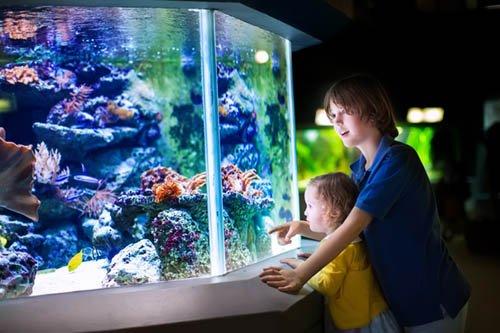 Sealife exhibit aquarium